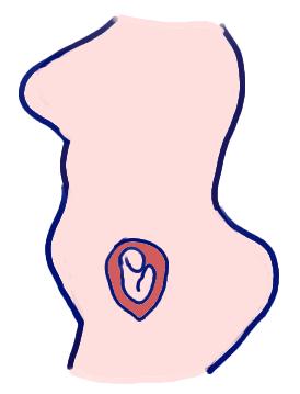 新生児の頭くらいの大きさの胎児