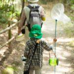 昆虫採集のコツ – 場所探し、見つけ方、捕まえ方、自由研究