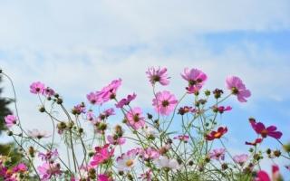 花のたくさん咲いている場所