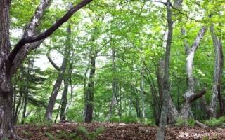 森や林の入り口