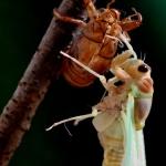 セミの幼虫がふ化