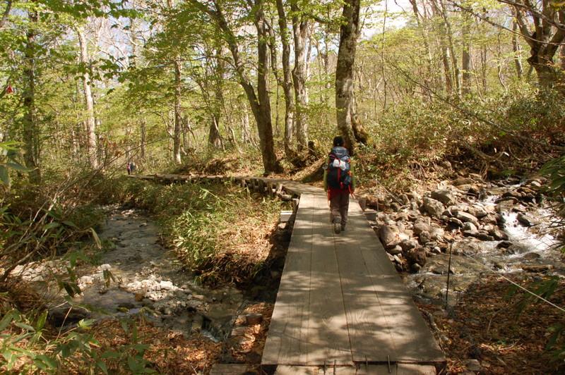 尾瀬の木道を歩く