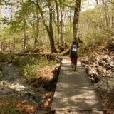 尾瀬のブナ林と木道
