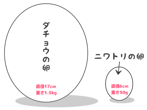 ダチョウの卵とニワトリの卵のサイズ比較