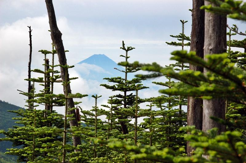 大弛峠から金峰山、富士山