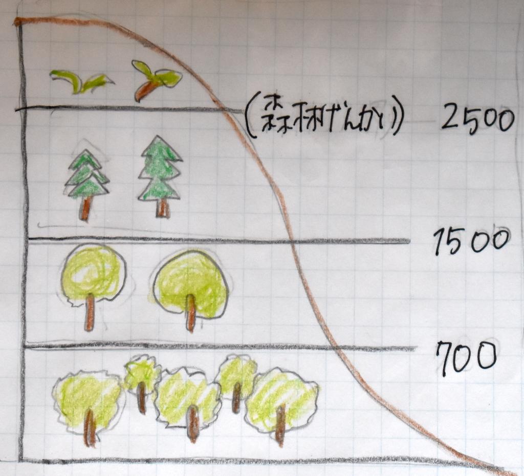 森林限界とは